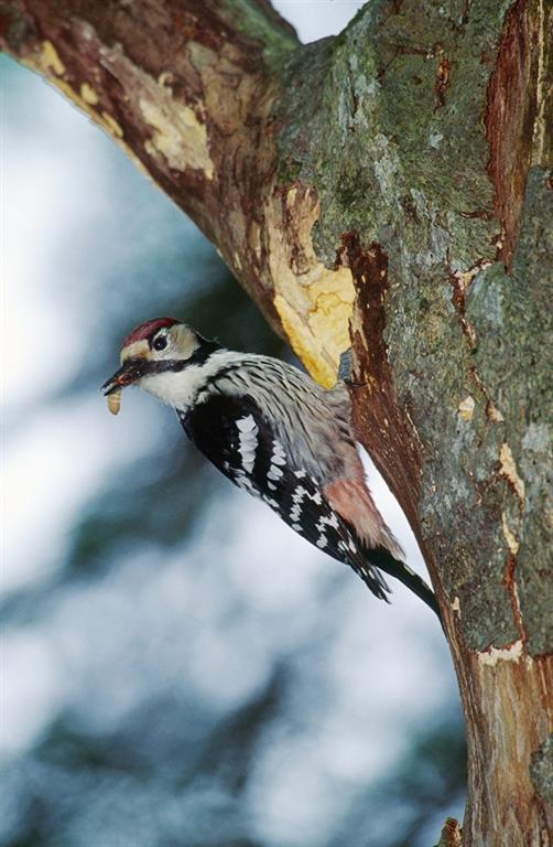 Vögel Nationalpark Kalkalpen Home Nationalpark